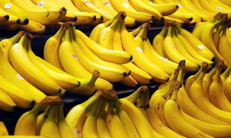 Kanceri, tensioni, zemra…; ja pse duhet të konsumojmë dy banane në ditë